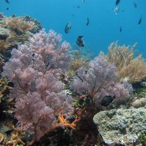 коралловый риф в амеде на бали