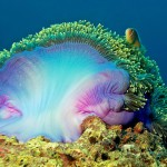 anemone diving bali