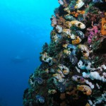 coral reef diving bali