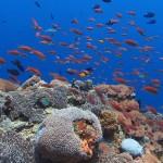 coral garden diving bali