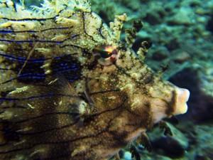 file fish diving Bali