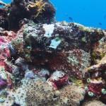 scorpion fish diving bali