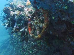 wreck usat liberty diving bali