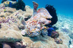 Frogfish дайвинг на Бали