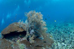 Кораллы в Tepekong
