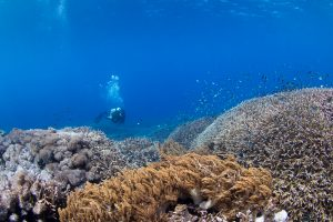 Коралловый риф в Сакенан (Sakenan)