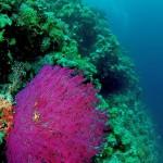soft coral diving bali