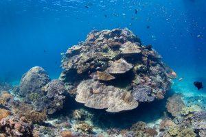 Огромный коралл в Crystal Bay дайвинг на бали