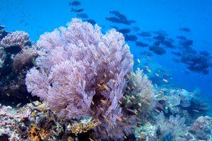 Мягкий коралл, дайвинг на Бали
